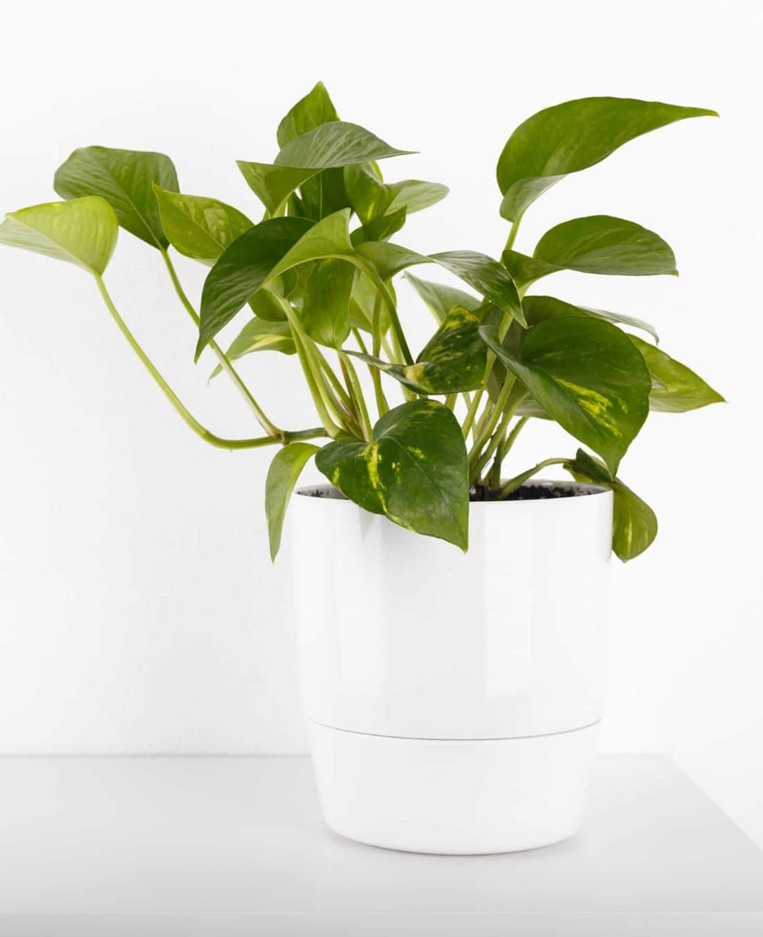 Office Desk Plants | Office Plants | Benefits Of Plants In The Office | ImpeccaBuild 11