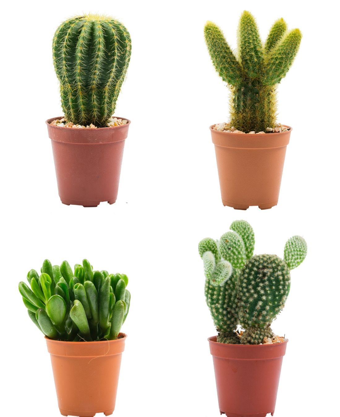 Best Office Plants | ImpeccaBuild | Cactus Plants