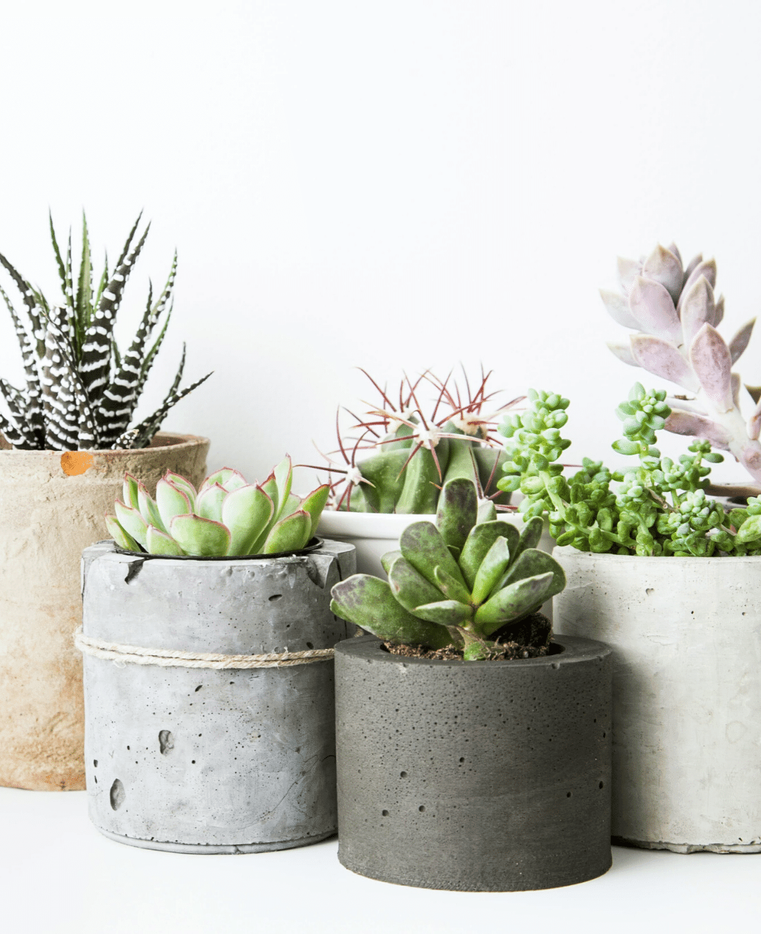 Indoor Office Plants Feng Shui | ImpeccaBuild | Succulents