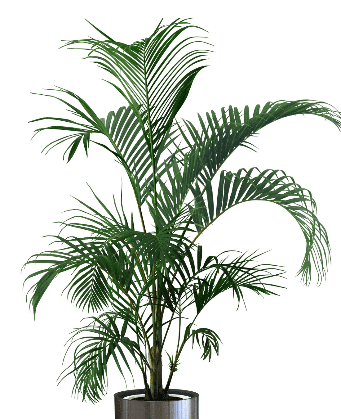 Indoor Office Plants Feng Shui | ImpeccaBuild | Areca Palm