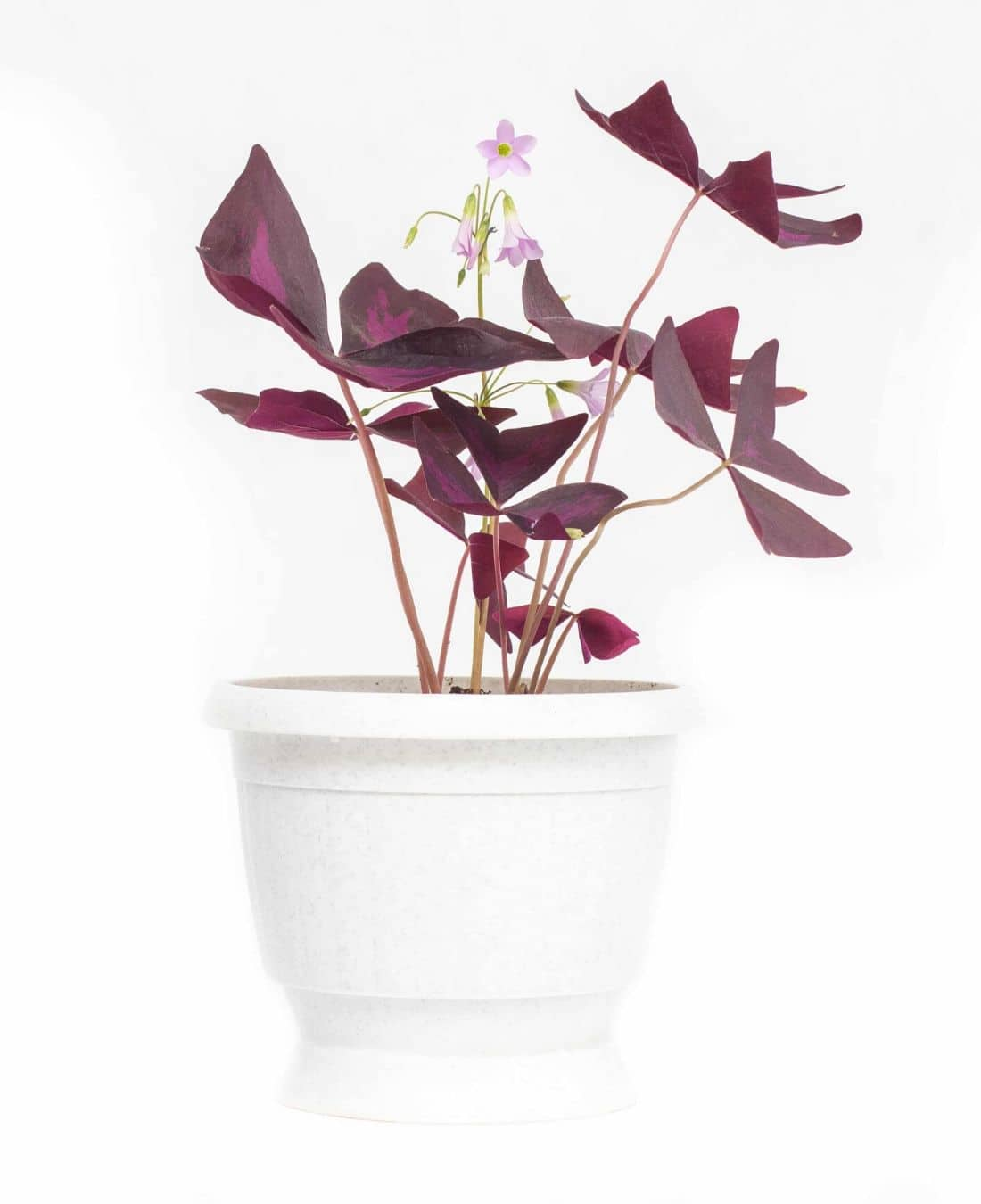 Office Desk Plants | Office Plants | Benefits Of Plants In The Office | ImpeccaBuild 13