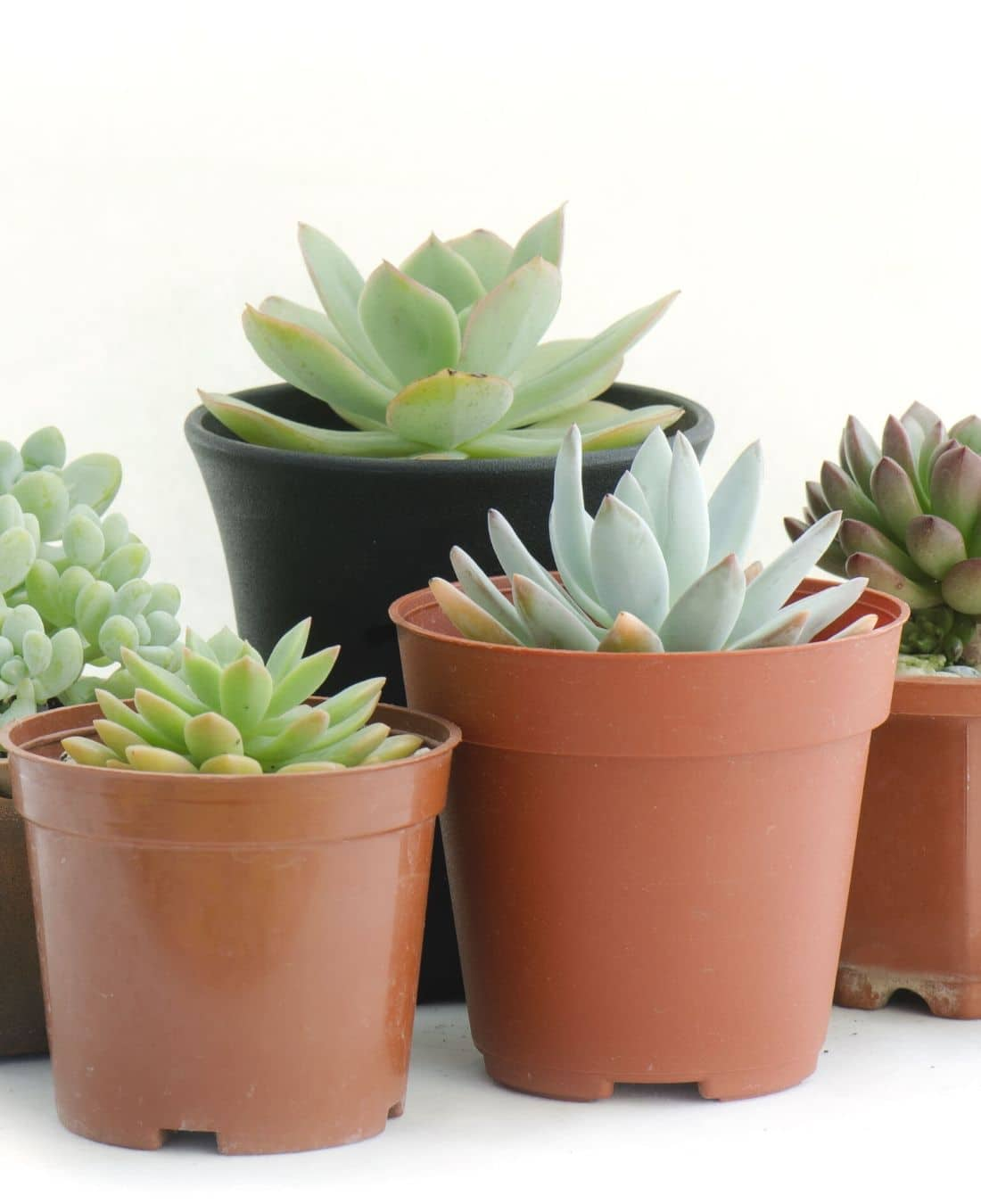 Office Desk Plants | Office Plants | Benefits Of Plants In The Office | ImpeccaBuild 14