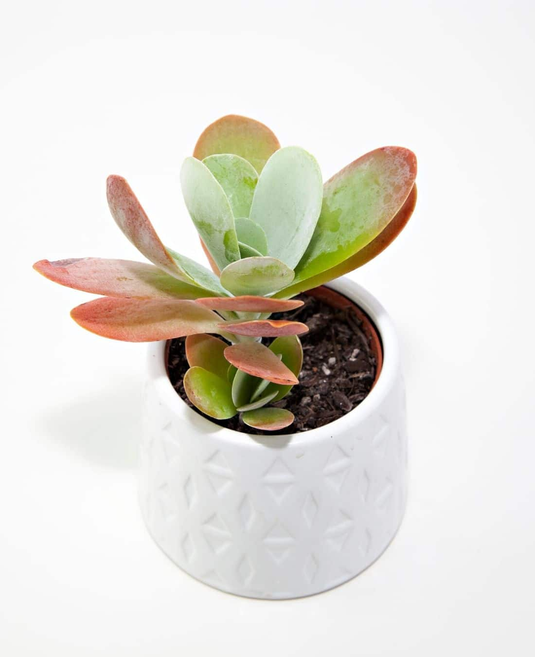 Office Desk Plants | Office Plants | Benefits Of Plants In The Office | ImpeccaBuild 15