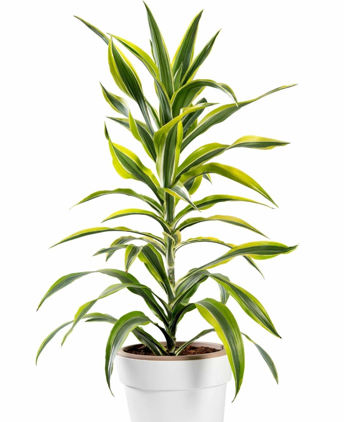 Office Desk Plants | Office Plants | Benefits Of Plants In The Office | ImpeccaBuild 16