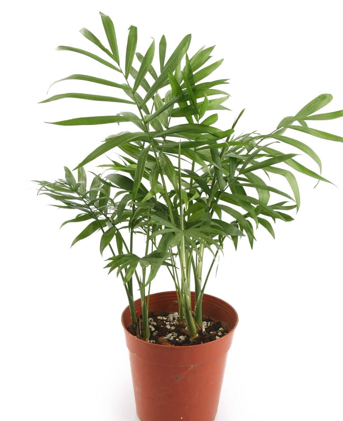 Office Desk Plants | Office Plants | Benefits Of Plants In The Office | ImpeccaBuild 2