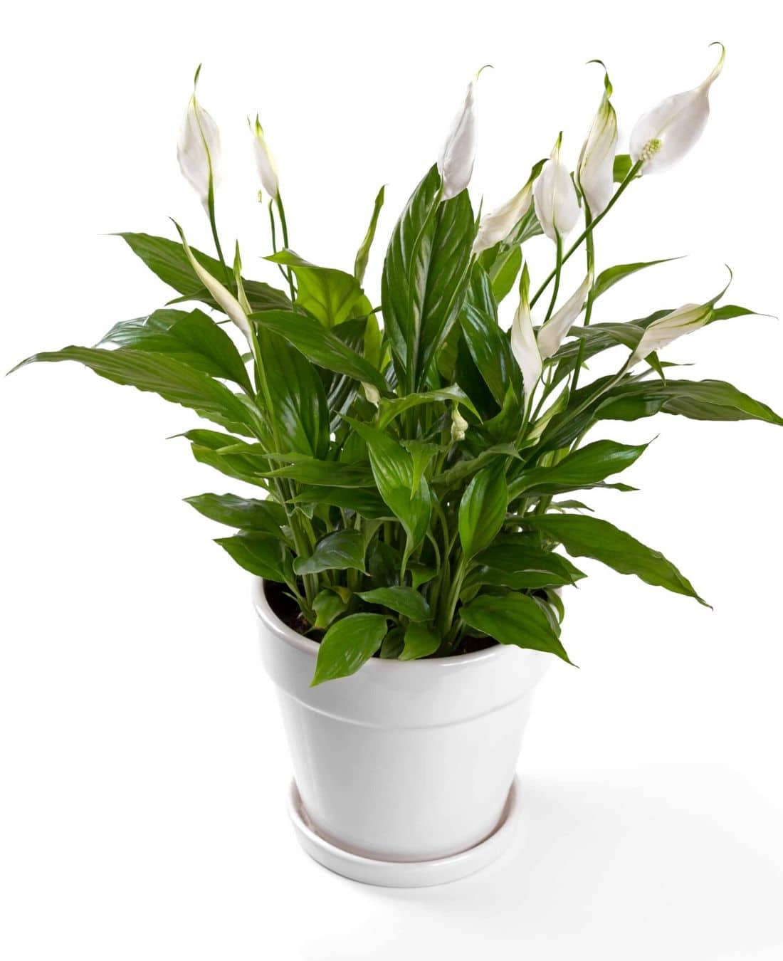 Office Desk Plants | Office Plants | Benefits Of Plants In The Office | ImpeccaBuild 6