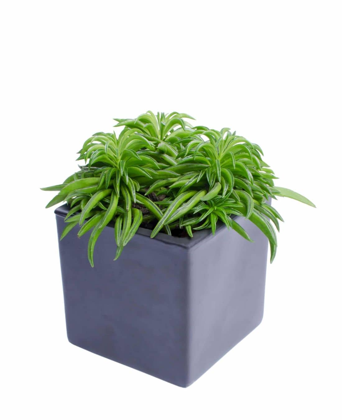 Office Desk Plants | Office Plants | Benefits Of Plants In The Office | ImpeccaBuild 9
