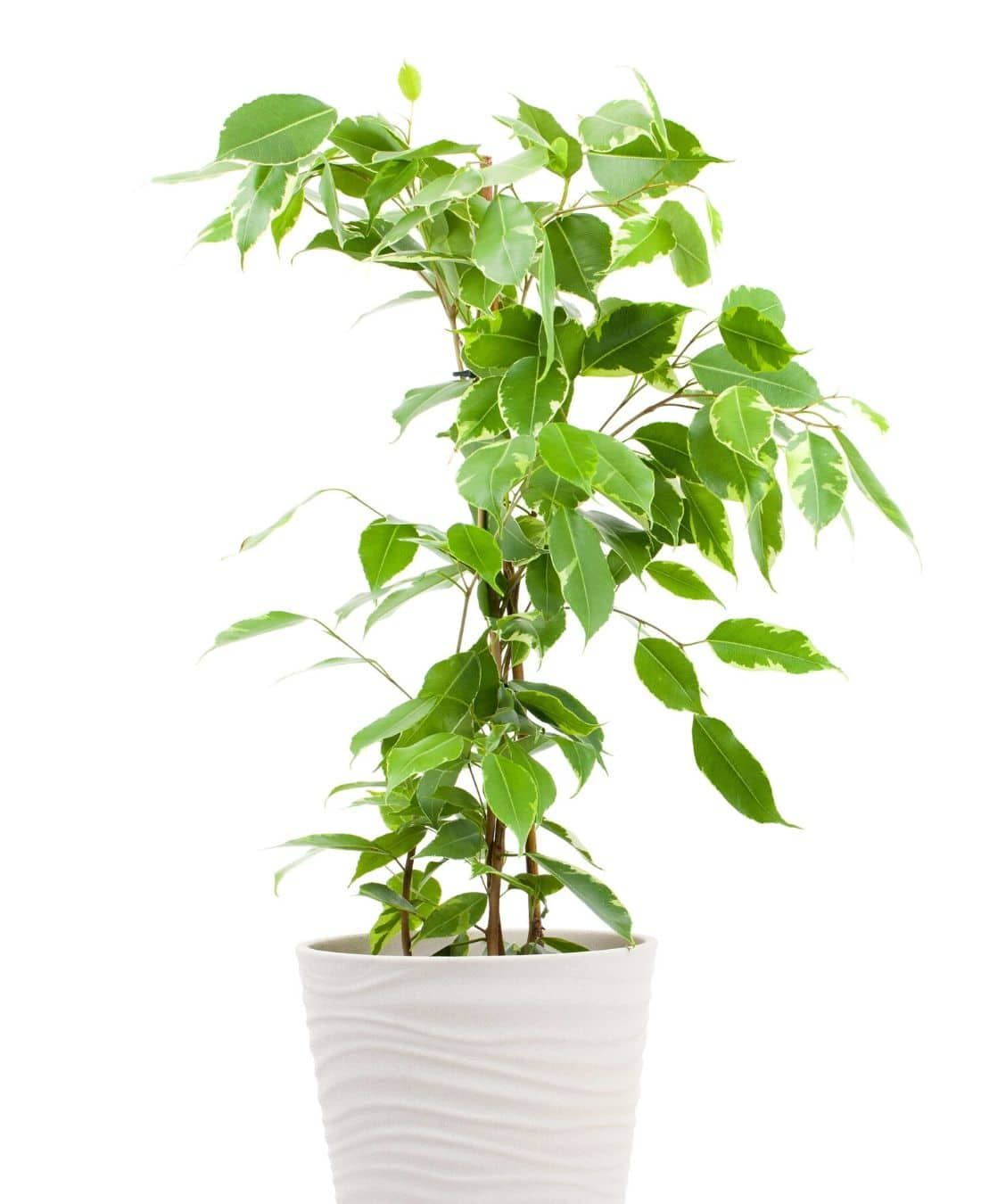Office Desk Plants | Office Plants | Benefits Of Plants In The Office | ImpeccaBuild 10