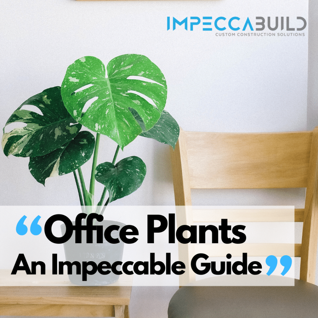 Office Plants | Indoor Office Plants | Benefits Of Plants In The Office | An Impeccable Guide | ImpeccaBuild