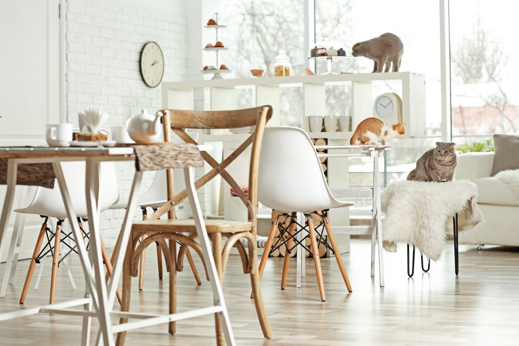 Cafe Theme Ideas | Cat Cafe Fitout | ImpeccaBuild